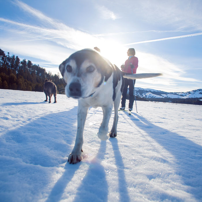 Dog Friendly Trails at Royal Gorge XC Resort atop Donner Summit.