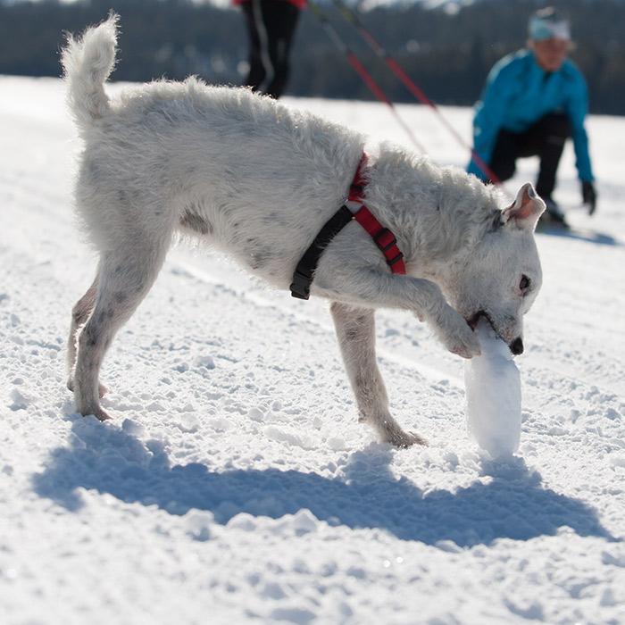 Dog Friendly Trails at Royal Gorge